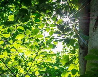 Sunburst through summer leaves photo Green woodland fine art print - many size options