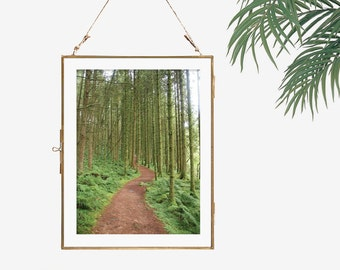 Fine art photography forest fantasy photo wall art woodland decor nature photography brown green wall decor office decor living room decor