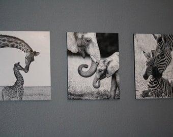 Mommy Baby Animal Photos for Nursery