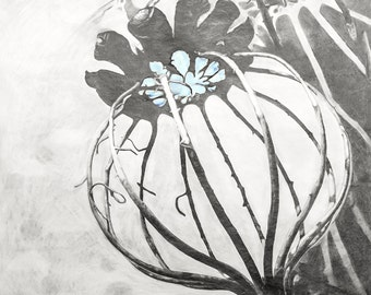 20x20, Poppy Pop Pod, framed in white wood, photographic print by Katherine Baronet