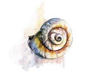 "Seashell Painting 3 - Print from Original Watercolor Painting, ""Shark-eye Shell"", Beach Decor, Sea Shells, Seashell Art"