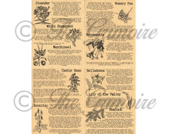 4 Book of Shadows Pages on Poisonous Plants, Wicca, Witchcraft, BOS Pages, Spell Pages, Like Charmed