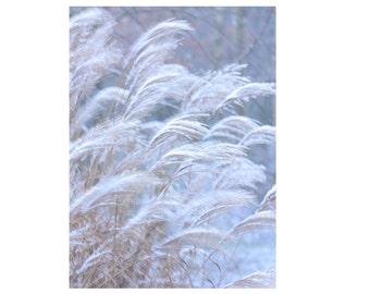 nature photo botanical print winter grasses art photography print gifts bedroom living room
