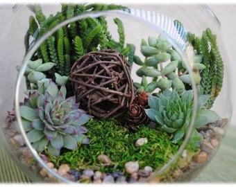"Large Globe Succulent Terrarium Kit ""Woodsy""-Succulent DIY Kit-Gift for Him-Housewarming Gift-Birthday Gift-Gift Idea-Gift for Him"