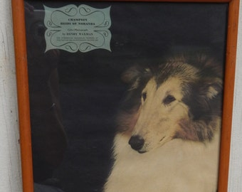For The Collie Dog Lover!