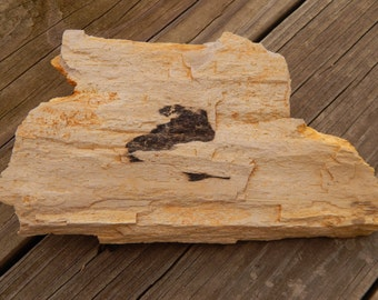 Genuine ROUGH PETRIFIED WOOD Specimen Stone - Over One Pound! - Beautiful Wood Grain Detail - Fossils - Crystals - Gemstone Collections