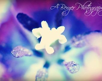 Blue & Purple Macro Tulip Photo