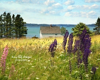Lupines Cabin Beach in Lubec, Maine Photography 5x7 8x10 11x14 28x18
