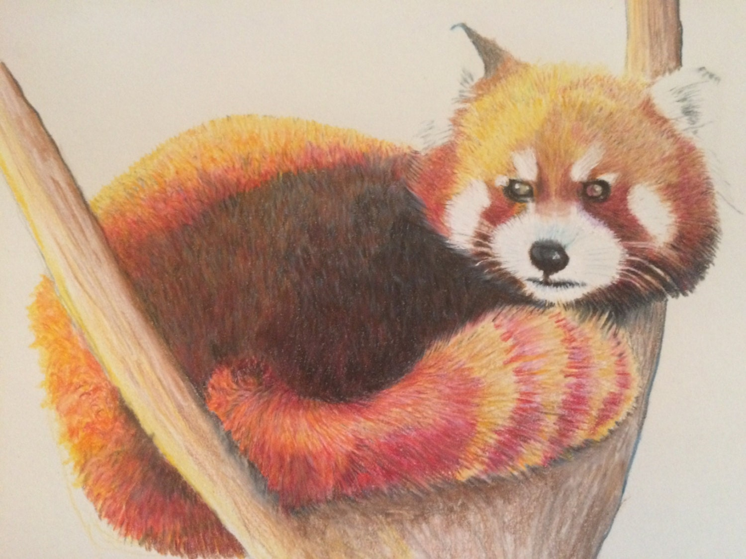 how to draw a red panda video