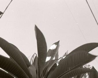 monochrome leaves 35mm film print