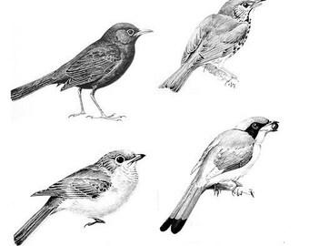 Set of 4 birds - temporary tattoos
