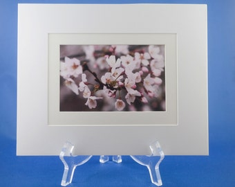 Cherry Blossom Matted print