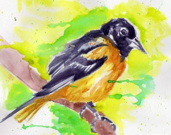"Original-Oriole-water color on water color paper 8.5""x8.5"""