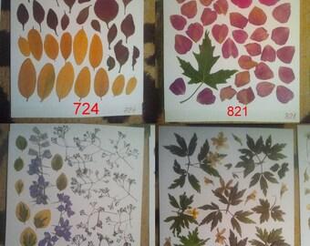 Pressed flowers, dried flowers, pink peonie, pressed petals, vintage colors,Daisy,Gypsophila, Oshibana supplies #724 #821 #834 #825