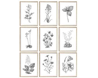 Black and White Art Print SET of 9, black and white decor, botanical prints, botanical drawings, botanical posters, botanical set, 11x14