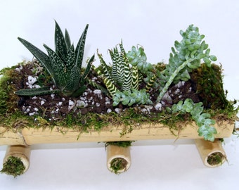 10 Inches Bamboo Boat Succulents Planter Centerpiece