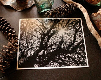 Winter Branches~Fine Art Photography Print By Kasey Don Culp For Wildlife Conservation