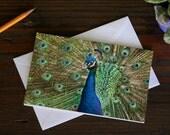 Peacock Blank Greeting Card