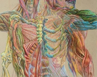 Anatomy #4 Series: Drawing the Line