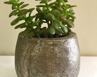 Jade Plant Succulent 'Money Tree' in Metallic Pot (6)