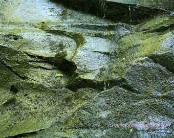Fern Falls II Photograph