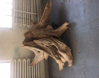 Rustic Knotted Tree Stump