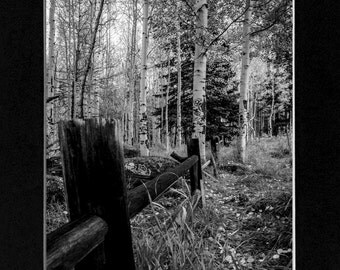 Black and White photo in Flagstaff