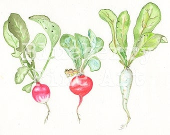 Red radishes | Etsy