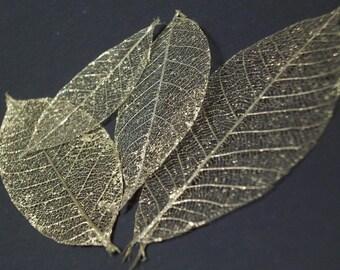 Decorative Gold-Rubbed Skeleton Leaves- 20 Piece Pack [Destash]