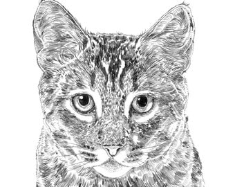 Frankie The Cat Print