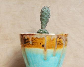 Cactus Planter in Desert Landscape Colors - Modern Ceramics - Ceramics and Pottery