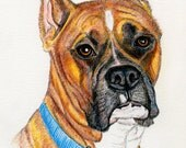 Boxer Dog ATC ACEO