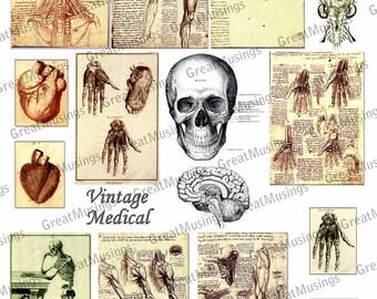 Vintage Medical Science Download Digital Collage Sheet download graphics skeletons skulls bones heart images No.229