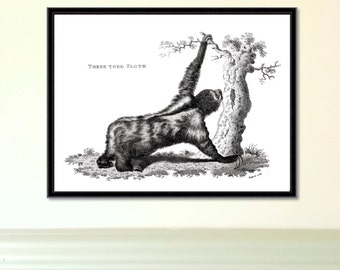 Vintage Sloth Print | Three Toed Sloth | Reproduction | sloth print | giclee | home decor | antique sloth print | wall art | engraving | art