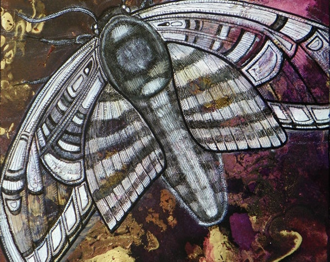 Featured listing image: Original Moth Insect Art Painting by Lynnette Shelley