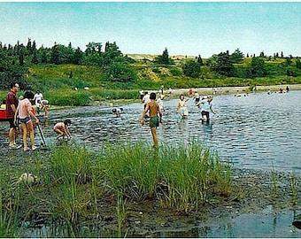 Cape Cod Vintage Postcard - Clam Diggers at the Salt Pond in Eastham (Unused)