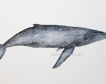 humpback whale original watercolor painting