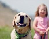 Dog Scarf, Big Puppy Scarf, Dog Collar, Dog Fringed Scarf, Dog Gift, Large Dog Crochet Scarf, Emerald Green Scarf for Dog