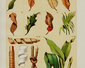 1903 Antique LEAVES print, tree leaves, forest, wood, fallen leaves,  chromolithograph, 12 x 9 inches