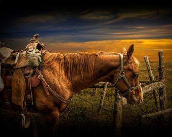 Saddle Horse on the Prairie No.5528 A Fine Art Western Cowboy Landscape Photograph