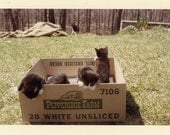 "Vintage Photo ""Pepperidge Kittens"" Snapshot Photo Old Antique Photo Black & White Photograph Found Paper Ephemera Vernacular - 92"