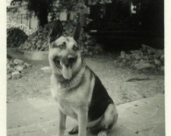 "Vintage Photo ""Looking for Water"" Snapshot Photo Old Antique Photo Black & White Photograph Found Photo Paper Ephemera Vernacular - 156"