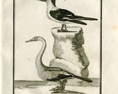 1803 Antique Birds Print Buffon Anhinga and Skimmer, Waterbirds Engraving, Drawing by De Seve
