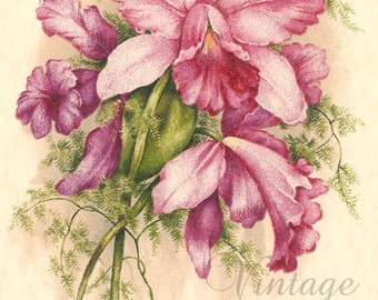 Pink & Lavender Orchids Antique French Postcard Chromolithograph Chromo Post Card from Vintage Paper Attic