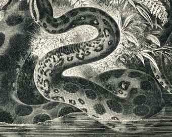 Anaconda snake print snake in tropical rainforest print jungle print tropical decor : Antique 1890s engraving  Victorian art old book plate