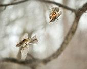 The Sparrow Races--birds x 2