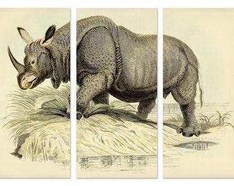 Rhino Art Triptych From Vintage Illustration, Rhinoceros Wall Art, Rhino Print, Large Art, Safari Animal Canvas Wall Art, Wild Animal Print