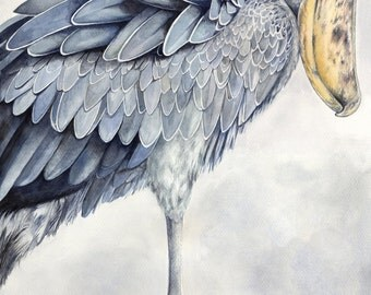 "Shoebill Stork ""King Brutus"" Art Print"
