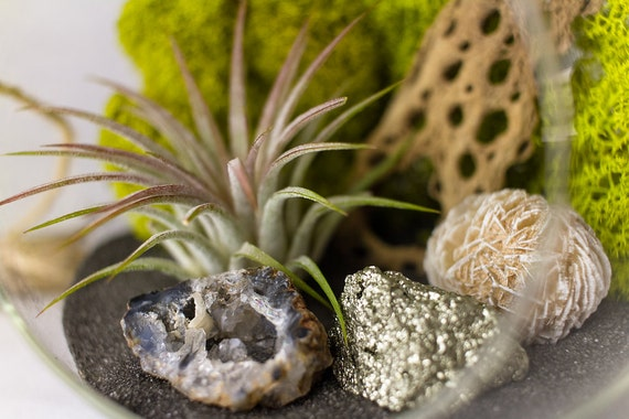 Hanging Terrarium Kit with Air Plant, Geode, Pyrite, & Desert Rose || Danish Modern || Medium Round