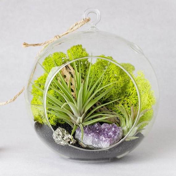 Amethyst Cluster and Pyrite Air Plant Terrarium Kit || Valentine's Day Gift || Large Round Hanging